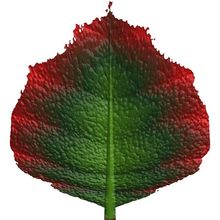 rendition: Isolated leaf Stock Photo
