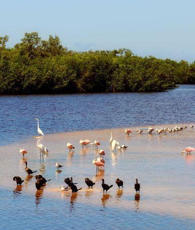 sandbar: Tropical birds on a sandbar in Florida