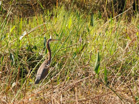 Bird in the Everglades national park