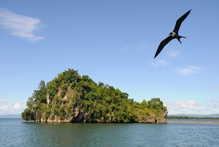 Isolated caribbean island with dense vegetation and birds Stock Photo