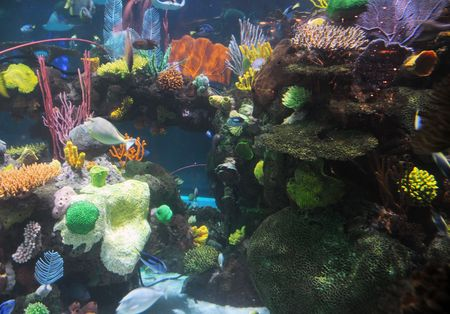 Colorful fish and sea creatured near tropical reef