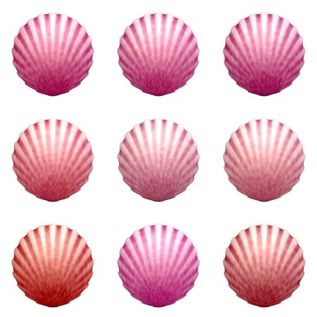 Pink colored shells isolated on white background Zdjęcie Seryjne