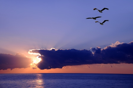 Three pelicans over the ocean at dawn