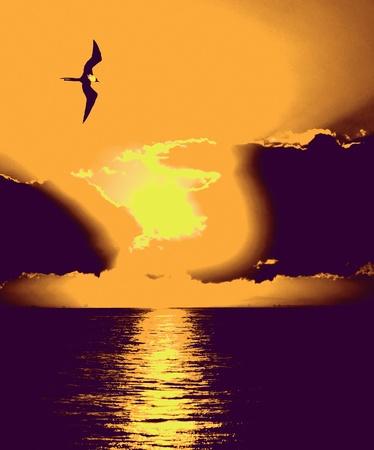 Single frigate bird over the ocean at sunrise