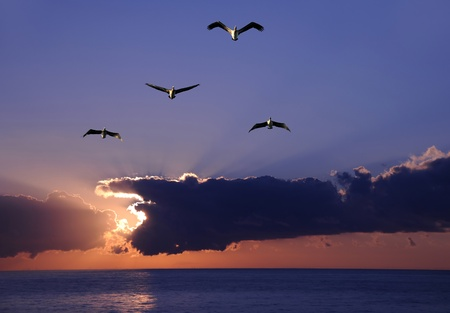 Pelicans flying over the ocean at sunrise