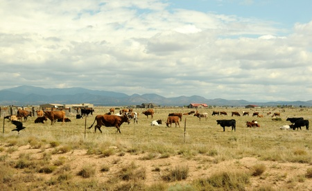 southwest usa: Cattle ranch in New Mexico, Southwest USA