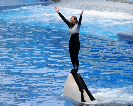 ORLANDO, FEBRUARY 25, 2009: SeaWorld trainer dies in killer whale attack in Orlando. Pictured: Killer whale trainer greets visitors during show