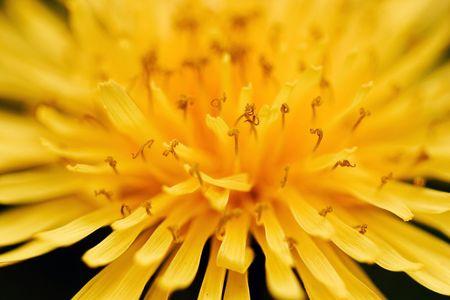 Yellow petals radiating like sun beams