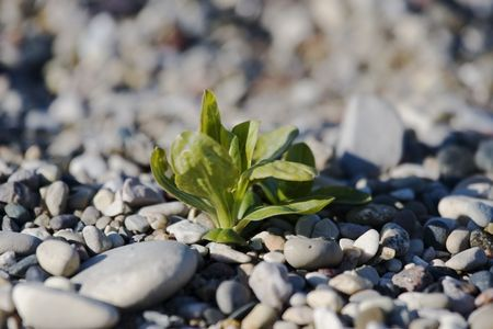 Solitary green sapling struggling to grow from bare rock
