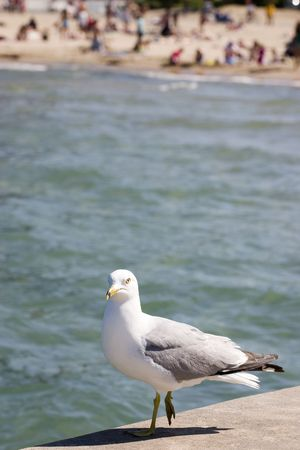 Gull standing on pier with water and beach in background Stok Fotoğraf