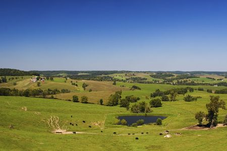 Panoramic landscape with green grass fields, trees, farms, cows and pool Stok Fotoğraf