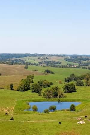 Vertical landscape with green fields, farms, cows and blue pool Stok Fotoğraf