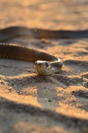 creeping serpent