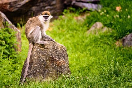 Monkey sits at rock in zoo Stock Photo