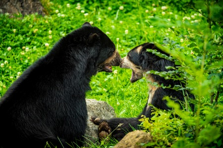 Black bears in zoo Stock Photo