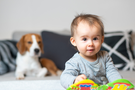 Baby with a Beagle dog in home. Family friendly dog in house. Dog lie on sofa in background and baby looking towards camera. Stock fotó