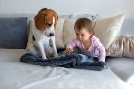 Dog with a cute baby girl on a sofa. Beagle sitting next to cute baby girl on blanket in living room. Copy space. Stok Fotoğraf