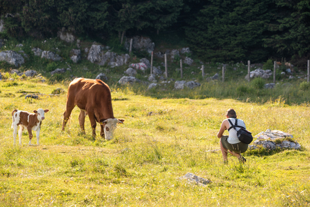 Young man photographing a cow in nature. On the Schockl mountain near Graz in Styria. Tourist and hiking destination in Austria.