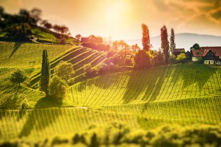 Österreich Weinberge Sulztal Leibnitz Bereich Südsteiermark, Weinland. Sonnige Landschaft des berühmten Reiseziels