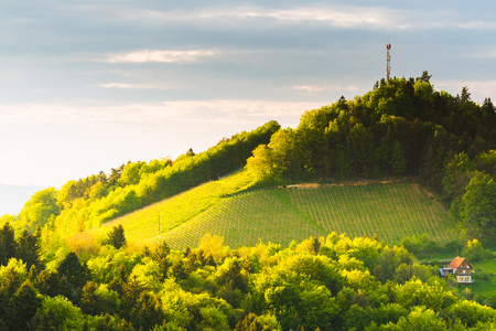 Austria Vineyards Sulztal Leibnitz area south Styria, wine country. Sunny landscape of famous tourist destination