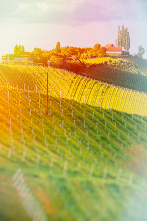 Austria Vineyards Sulztal Leibnitz area south Styria, wine country. Sunny landscape of famous tourist destination. Edited Version of image