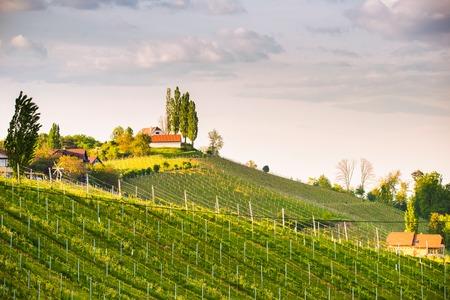 Austria Vineyards Sulztal Leibnitz area south Styria, wine country. Sunny landscape of famous tourist destination Stock fotó