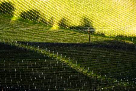 South styria vineyards landscape, near Gamlitz, Austria, Eckberg, Europe. Grape hills view from wine road in spring. Tourist destination, travel spot. Фото со стока