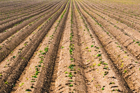 Cultivated field, ploughed rows in pattern. Agricultural themed background
