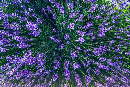 Top view of a bouquet of purple lavender flowers . Bunch of lavender flowers. Photo from above. Stock fotó