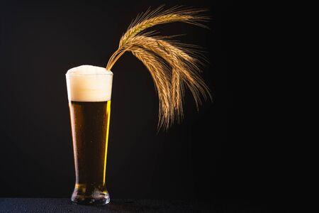 Brewery, drinks and alcohol concept - close up of beer in long glass with barley coming out of foam.