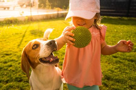 Young 12-18 months caucasian baby girl playing with beagle dog in garden. Dog chasing a girl with a ball on grass in summer day barefoot.