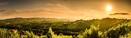 Panorama of vineyards hills in south Styria, Austria. Tuscany like place to visit. Landscape during summer sunset.