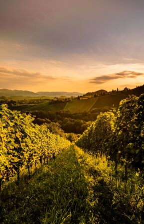 Landscape view of vineyard on hill in evening. Wine grapes growing in south Styria, wine country, famous tourist destination Stockfoto