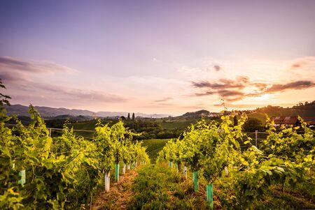Vineyards in Slovenia close to the border with Austria south styria. tourist destination