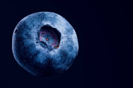 One blueberry closeup isolated on dark blue background. Very detailed macro shoot with subject on left. Copy space on right Banque d'images