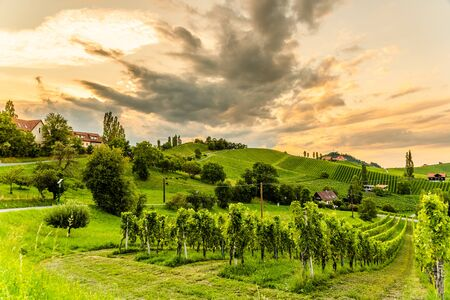 South styria vineyards landscape, Sulztal near Gamlitz, Austria. Grape hills view from wine street ( Sulztal Weinstrasse ) in summer. Tourist destination, travel spot.