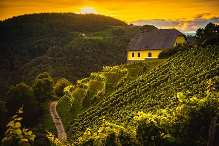 Colorfull landscape of sunset at vineyards in Austrian countryside in town Kitzeck im Sausal