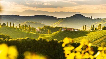 South styria vineyards landscape, near Gamlitz, Austria, Eckberg, Europe. Grape hills view from wine road in spring. Tourist destination, panorama