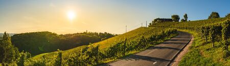Panoramic view from vineyard to green hills of south styrian wine route in Austria in sunset. Glanz an der Weinstrasse.