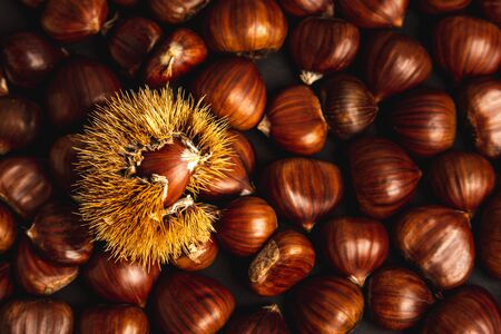 Ripe chestnuts close up. Raw Chestnuts for Christmas. Fresh sweet chestnut. Food background. Brown theme.