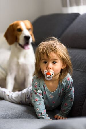 Cute 2 year old Baby girl on a bed on her belly with head up looking into camera with her big eyes. Beagle dog in background