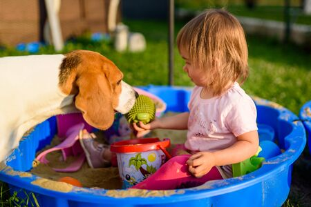Baby girl playing in a sandbox outdoors in sunny day. Beagle dog compannion. Child in blue sandbox in summer.