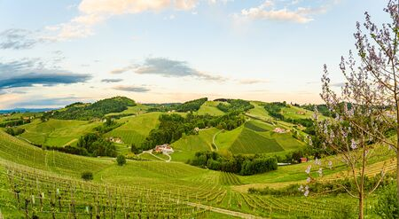 Vineyards panorama in Steinbach, Leibnitz area famous destination wine street area south Styria , wine country in spring. Tourist destination. Green hills and crops Stock Photo