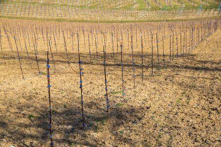 Austria - Kastenburg. Vineyards Sulztal, Leibnitz area south Styria wine street, wine country. March before season. Rows of grape plants winter, spring. Stock Photo