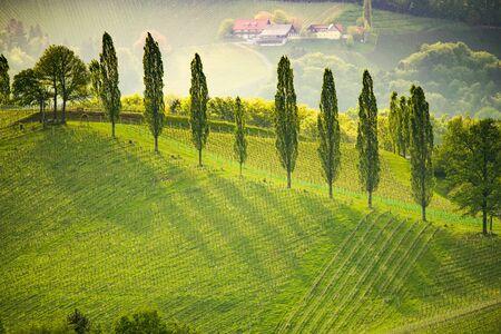 South styria vineyards landscape, near Gamlitz, Austria, Eckberg, Europe. Grape hills view from wine road in spring. Tourist destination, travel spot. Stock Photo