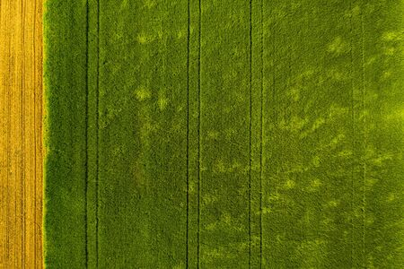 Green field in rural area. Landscape of agricultural cereal fields. Aerial view