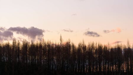 Landscape of forest against sunset sky with few small clouds. Nature background