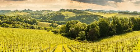 South styria vineyards landscape, place near Gamlitz, Austria, Eckberg, Europe. Grape hills view from wine road in spring. Tourist destination, travel spot.