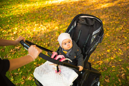 One year old cute baby girl in black strolly amazed to see colorful autumn leaves. Looking up at the trees. Autumn baby background, development concept.