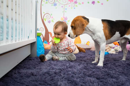 1 year old infant girl with dog in room chewing on rubber toy. pets with babys concept